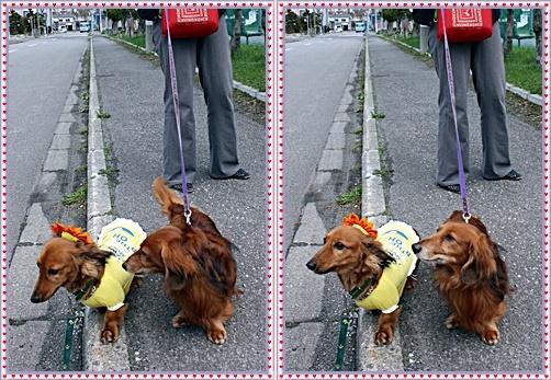 IMG_2395 - コピー-20110509-tile