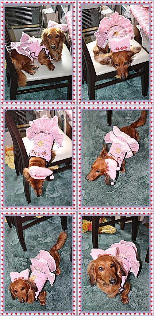 IMG_0604-20110313-tile.jpg