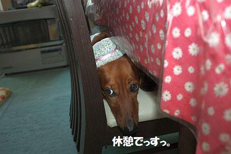 IMG_0889_20090920192713.jpg