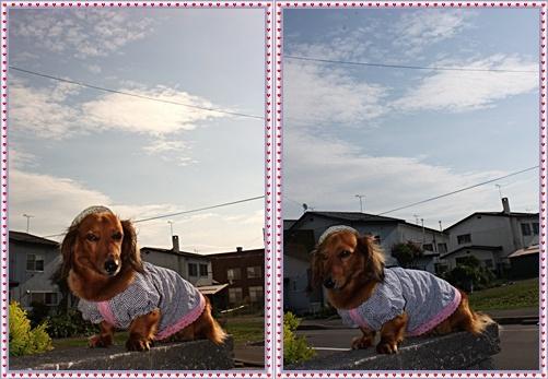 IMG_1197-20110911-tile.jpg