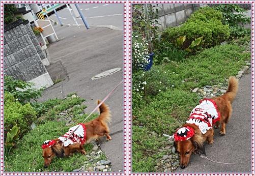 IMG_1555-20110918-tile.jpg