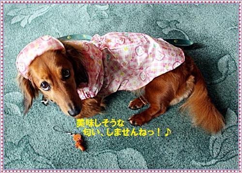 IMG_2410-20110515.jpg