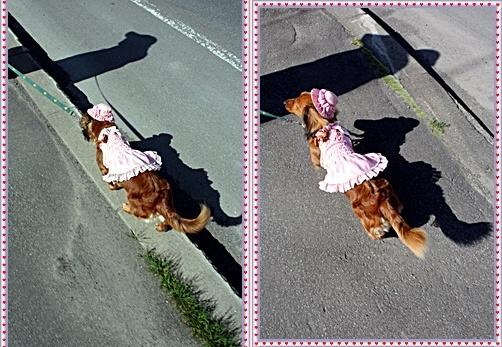 IMG_2467-20110515-tile.jpg