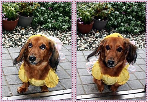 IMG_2523-20111003-tile.jpg
