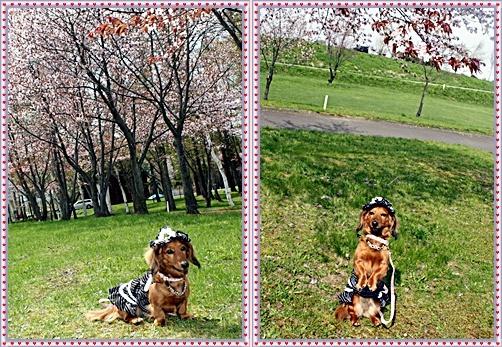 IMG_2632-20110518-tile.jpg