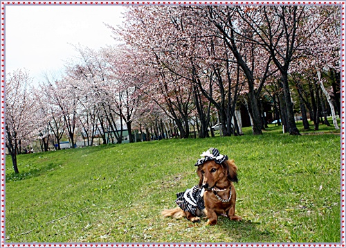IMG_2633-20110518.jpg