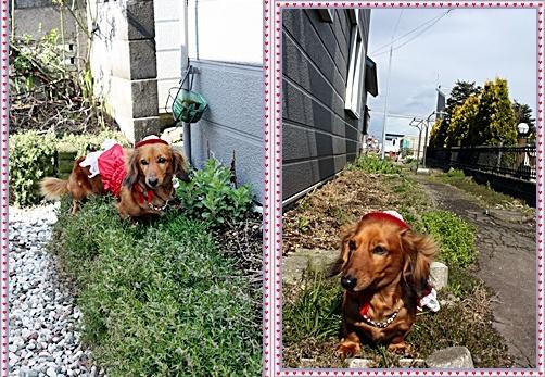 IMG_2672-20110518-tile.jpg