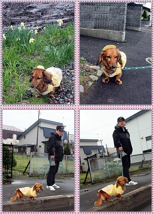 IMG_2891-20110522-tile.jpg