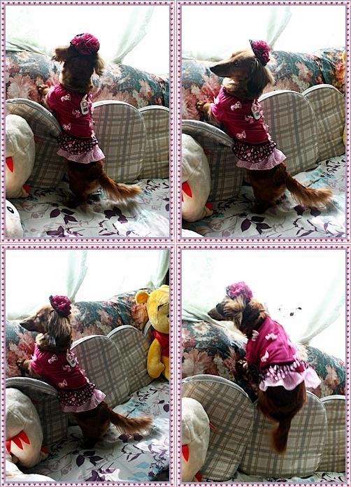 IMG_3145-20110529-tile.jpg