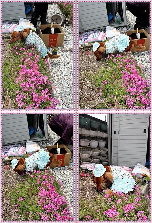 IMG_3226-20110529-tile.jpg