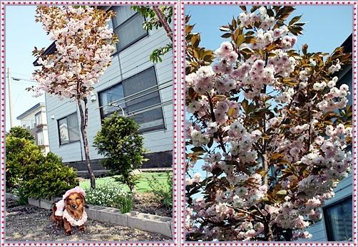 IMG_3369-20110601-tile.jpg