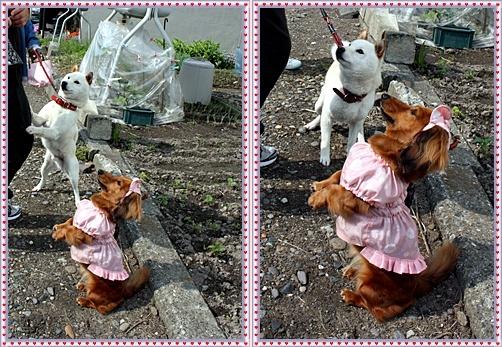 IMG_3631-20110608-tile.jpg