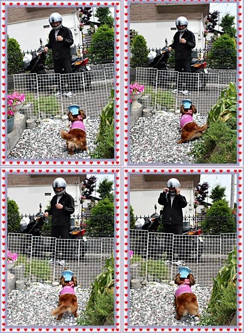 IMG_4729-20110703-tile.jpg