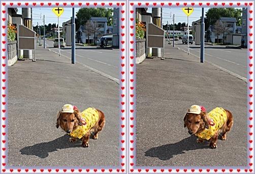 IMG_4865-20110709-tile.jpg