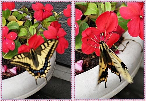 IMG_5388-20110724-tile.jpg