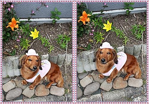 IMG_5862-20110724-tile.jpg