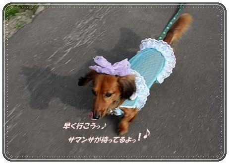 IMG_8881_20100911212314.jpg