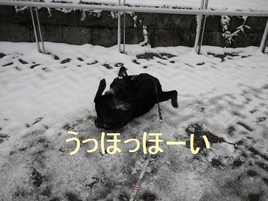 coco旅行 箱根