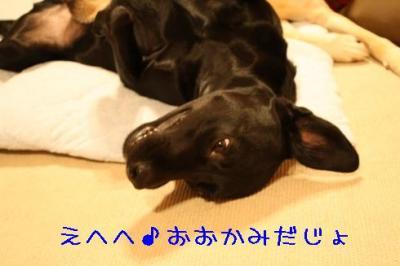 IMG_2240.jpg
