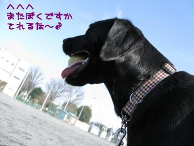 IMG_3856_20081225180837.jpg