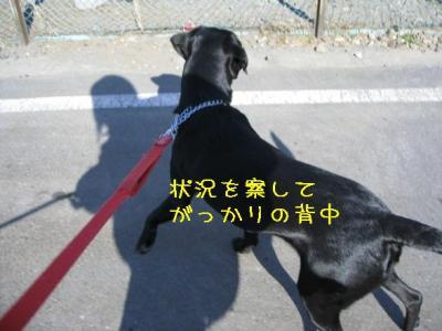 IMG_4173_20090109004603.jpg
