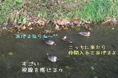 IMG_4747.jpg