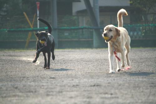 2009627朝の散歩♪