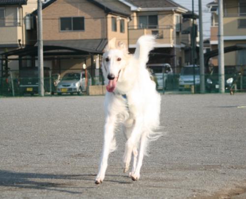 2009627アクアちゃん