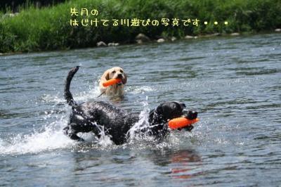 IMG_7364_20090809234351.jpg