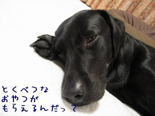2009714tokubetunaoyatu