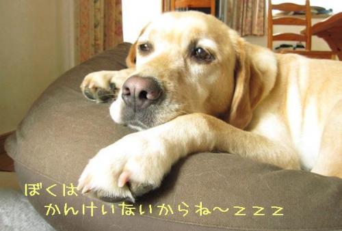 2009723kannkeinaiyo