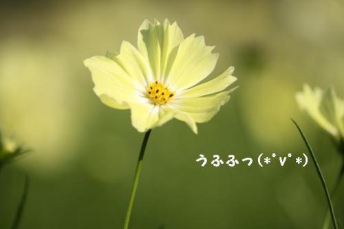 IMG_8508_20091022224124.jpg