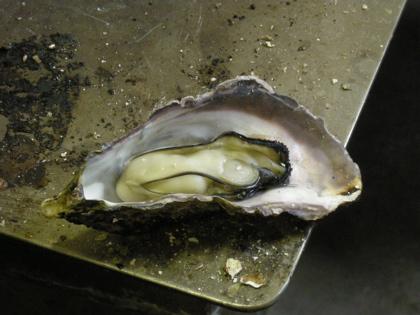 牡蠣の身でかっ