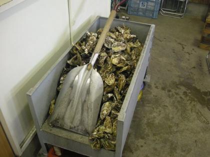 牡蠣とシャベル