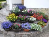 flower_20100628091838.jpg