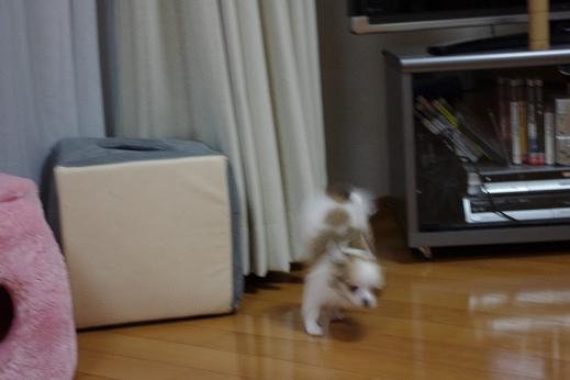 nana10_20100706212205.jpg