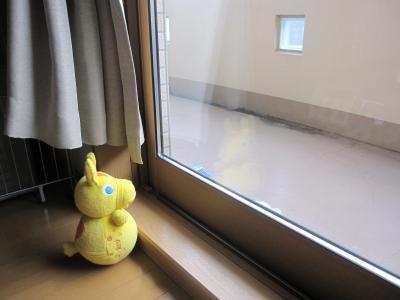 外を見つめるロディ