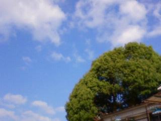 NEC_0449.jpg