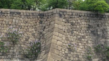 桐の花 石垣
