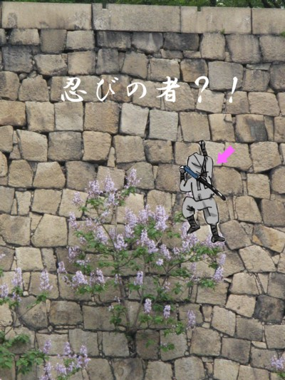 桐の花 忍者