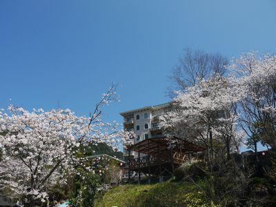 桜景色4月8日NO4