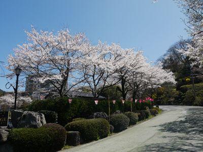 桜景色4月7日NO3