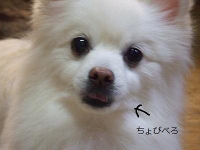 s-DSCF2641.jpg