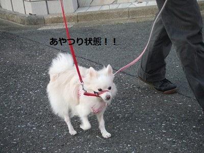 s-DSCF3899.jpg