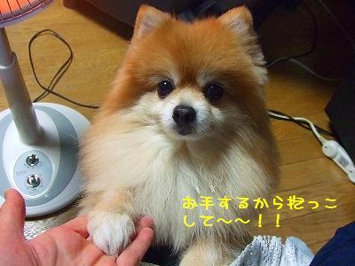 s-DSCF9462.jpg