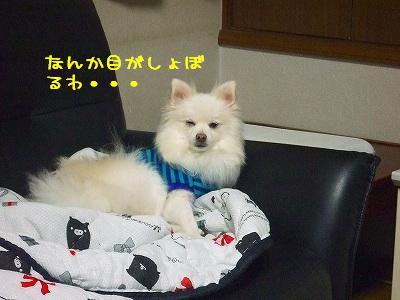 s-DSCF9463.jpg