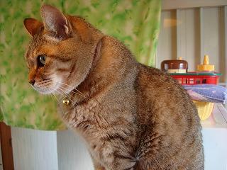 猫だけに、きれいな猫背です。