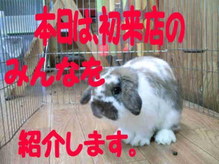 小五郎 あいさつ 2