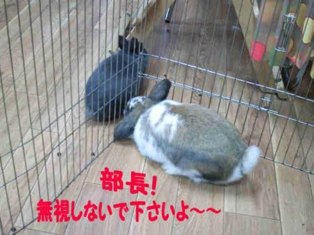 小五郎 無視される? (2)