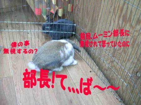 小五郎 無視される? (3)
